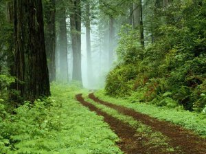 PHOTO earth has music trees