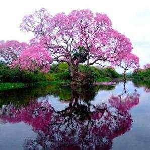 SA TREE
