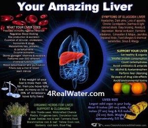 804 HEALTH amazing liver