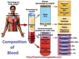 804 HEALTH blood