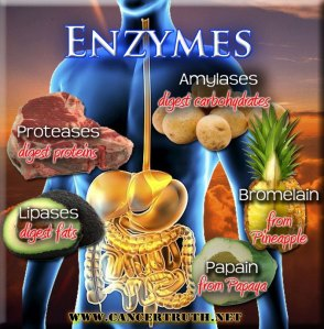 x factor: enzymes